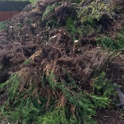 Evacuation dechets verts nantes